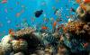 tourisme aquarium rochelle